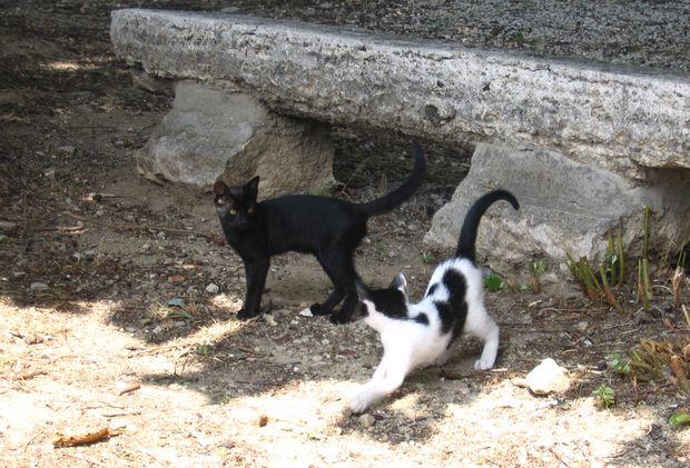 28-Klasztorne-koty