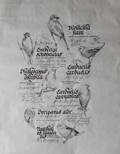 Ptaszki - Kamila Piazza - rysunek, Ewa Landowska - Kaligrafia, papier, 70 x 50 cm